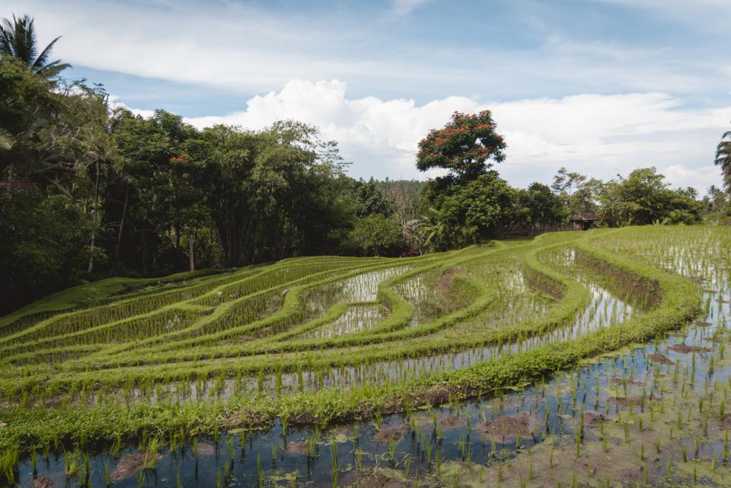 Rizières Bali Eco Stay